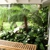 Tropical Tree Services Inc