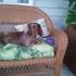 Serenity Pet Spa