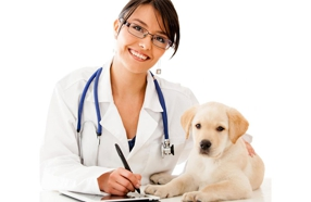 Top-Rated Veterinarians in the Nashville Area