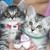 Cat Clinic Of Santa Cruz and Ocean Animal Clinic