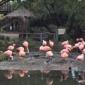 San Diego Zoo Safari Park - Escondido, CA