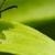 Cabellero Pest Control