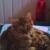 Catnip & Rawhide Pet Sitting Service