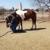4 D Horsemanship