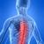 Chiropractic Fitness