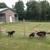 Packway Canine Free Range Boarding