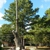 Top Notch Tree Service