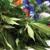 Alpenglow Premium Cannabis