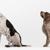 NOLA Animal Clinic