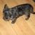 Kusch's Dog Grooming