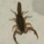Abolish Pest & Wildlife Control