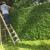 Antonio Solorio Lawn Maintenance