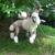 Canine Shear Heaven