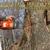 North Haledon Tree Service