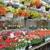 Van Putte Gardens