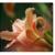 Hunt Valley Massage Center - Rebecca A. Watt, LMT