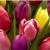Del City Village Florist