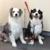 Pawfect Dog Grooming & Boarding
