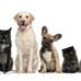 Hawaii Kai Veterinary Clinic