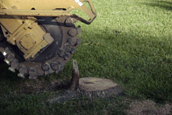 Affordable Carolina Tree Service stump grinding