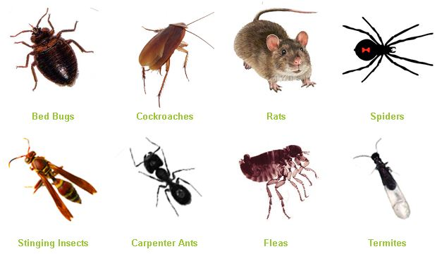 best pest service