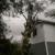 Hoods Tree Service