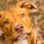 Smiling Dog Photography