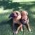Wag Time Dog Training