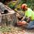 Battiste Tree Service