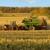 Georgia Farm Bureau Mutual & Casualty Insurance Company