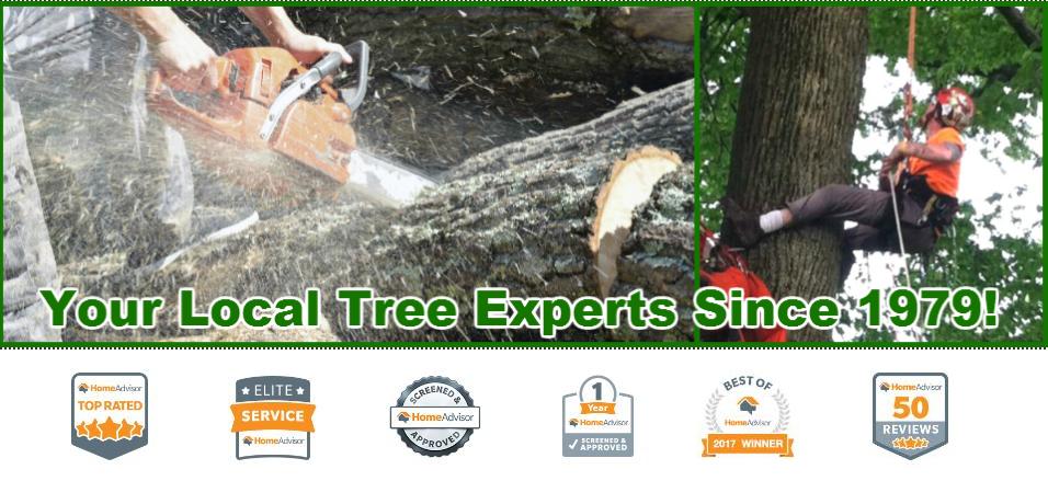 Tree Service Company In Madison Ohio