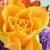 The Prairie Rose Floral Shop
