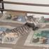 Memphis City Animal Shelter