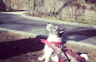 New York Dog Nanny - New York, NY