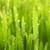 Classic Lawns Of Brevard