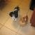Sassy Pups
