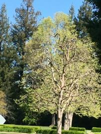 tree landscape service