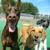 Dog Star Resort LLC