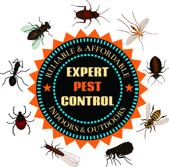 pest removal