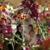 Ten Pennies Florist