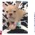 Vanity Pups Boutique
