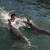 Swimming With Dolphins Tours And Tickets