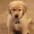 Happy Tails Pet Services Salisbury MD