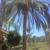 Cesareo Tree Service