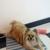 Impawsible Impressions Dog Salon