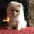 Sapphire Designer Dogs