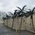 Dans Artificial Palm Trees & Restoration