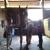 Sing Equestrian