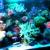 Living Reef Aquariums