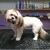Noah's Bark Doggie Spa